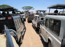Hustle and bustle during game drive Serengeti royalty free stock photography
