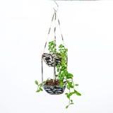 Husväxt som hänger, virkningarbete arkivbild