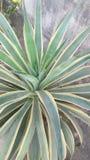 Husväxter Royaltyfria Bilder