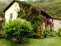 Husväxter; Montenegro Arkivfoton