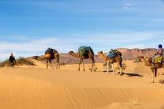 Husvagn av kamel i öknen Arkivfoton