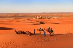 Husvagn av kamel, Sahara Desert, Marocko Royaltyfri Bild