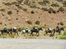 Husvagn av mulor som bär varor mellan Chile och Argentina royaltyfria bilder
