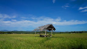 A farmers rest hut in a rice field Stock Photos