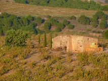 Hut in Banyuls sur Mer vineyard Royalty Free Stock Photo
