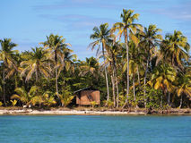 Hut on the beach. Beautiful palms on tropical beach with a hut, caribbean sea Stock Image