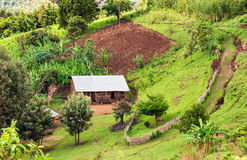 Hut in the Bonga forest reserve in southern Ethiopia. Ethiopian housing in the Bonga forest reserve in southern Ethiopia stock images