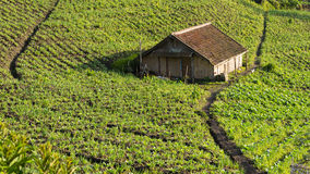 Hut at Cemoro lawang. Village in the morning Stock Photography