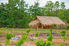 Hut. In the country of Thailand royalty free stock photography