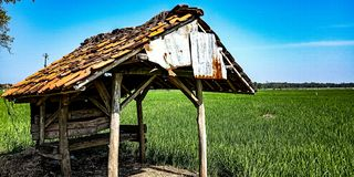 The hut in the ricefield royalty free stock photos