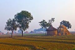 Hut of farmer in morning fog Stock Images