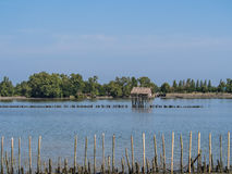 Hut and fence in the river. Near mangrove forest Stock Photos