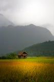 Vietnamese Hut in Field