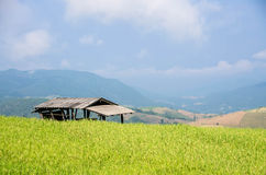 A hut in the field Stock Photography