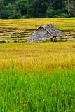 Hut in the fields of green, yellow Stock Photos