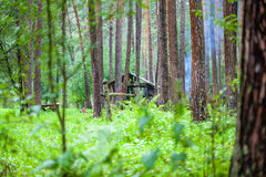 Hut in the green woods. Dense taiga. A journey in Siberia. A coniferous forest. Pine Royalty Free Stock Photos