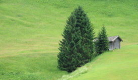 Hut and group of firs Royalty Free Stock Photo
