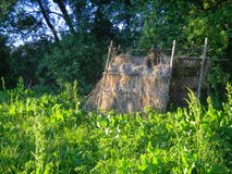 Hut. Half-destroyed hut made from dry cane and sticks Royalty Free Stock Photos