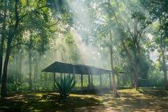 Hut in het bos royalty-vrije stock afbeelding