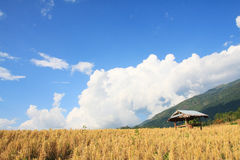Hut In Rice Filed Stock Photography