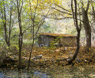Hut of the jobless person in autumn wood Royalty Free Stock Photography