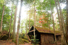 Hut in jungle Royalty Free Stock Photos
