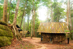 Hut in jungle Stock Image