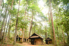 Hut in jungle Stock Photography