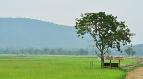 Hut in landbouwbedrijf Royalty-vrije Stock Afbeelding
