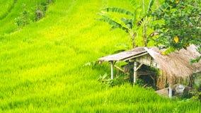 Hut between Lush Green of Rice tarrace in Sidemen, Bali, Indonesia Royalty Free Stock Image
