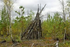 A hut made of twigs in a forest between trees stock images