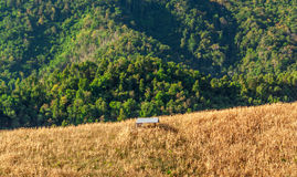 Hut in maize field Royalty Free Stock Images