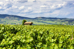 The hut in the middle of vineyards, Beaujolais, France Royalty Free Stock Photo