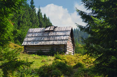 Hut in mountains forest. Hut in mountains fir forest Royalty Free Stock Photos