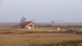 Hut Myanmar. Myanmar shacks by rail from Yangon to Bago Stock Image