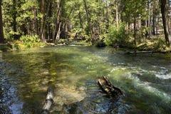 Hut-Nebenfluss in Nationalpark Lassens, Kalifornien Lizenzfreie Stockfotos