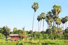 Hut op een banaanaanplanting, Myanmar, Azië stock foto's