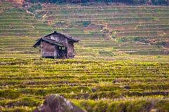 Hut op het gebied van rijstterrassen Royalty-vrije Stock Foto's