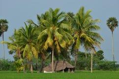 Hut op padiegebied met kokospalmen stock afbeeldingen