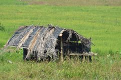 Hut in Paddy field. In Sri Lanka Royalty Free Stock Image