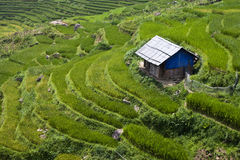 Hut and paddy fields Stock Photos