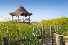 Hut palapa in mangrove reed wetlands Royalty Free Stock Image