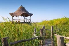 Hut palapa in mangrove reed wetlands Royalty Free Stock Image