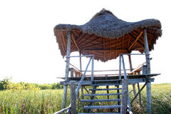 Hut palapa in mangrove reed wetlands Stock Photography