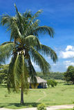Hut and palm tree in Cienfuegos. royalty free stock image