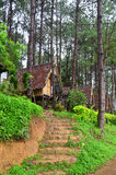 Hut in Pine tree forest at Pang Ung at Mae Hong Son Royalty Free Stock Image