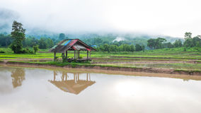 Hut in rice farm field Royalty Free Stock Photography