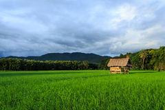 Hut in rice farm. Small hut in rice farm Royalty Free Stock Photo