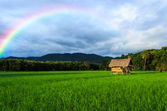Hut in rice farm. Small hut in rice farm with rainbow Stock Image