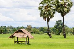 Hut in the rice field Royalty Free Stock Image